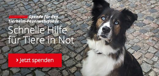 dino-welttierschutztag-betterplace-tierprojekte-unterstuetzen